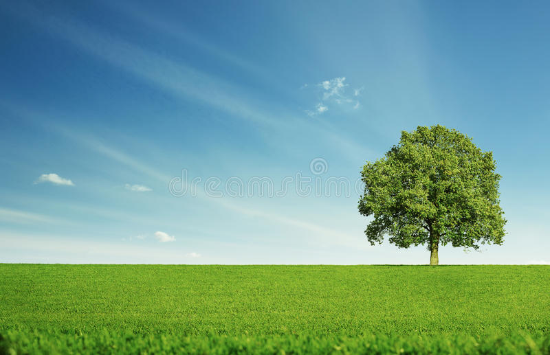 Osamotniony drzewo fotografia royalty free