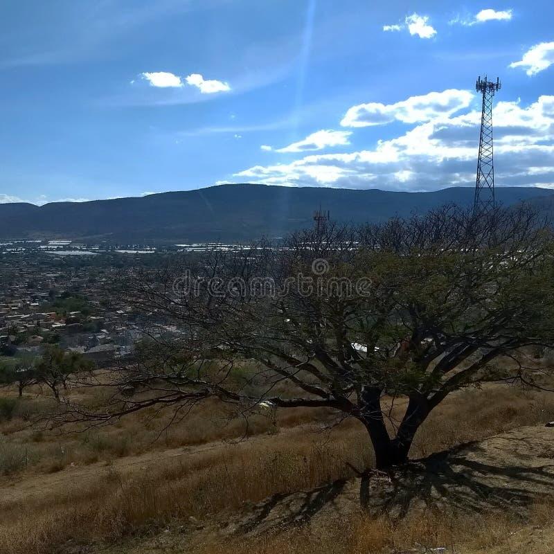 Osamotniony drzewo blisko miasteczka Jocotepec zdjęcia royalty free