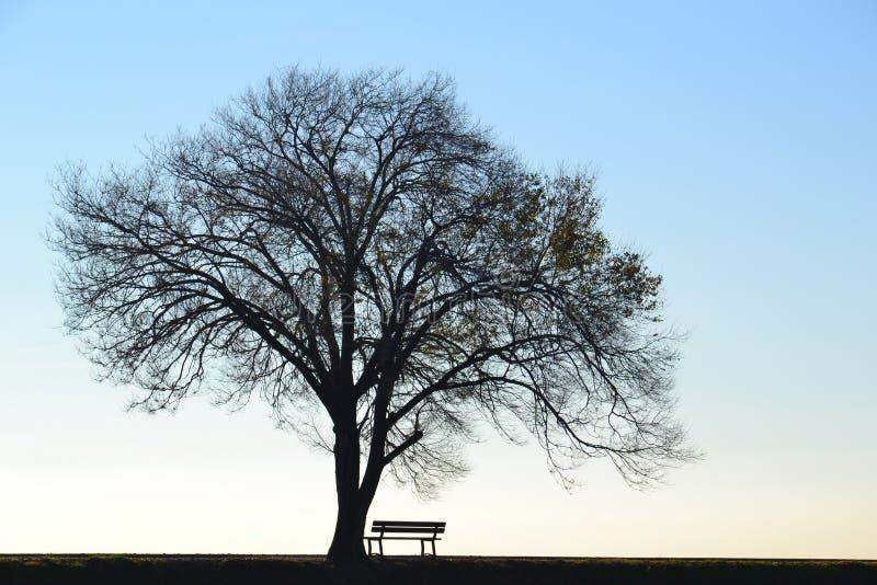 Osamotniony drzewo i ławka obrazy royalty free