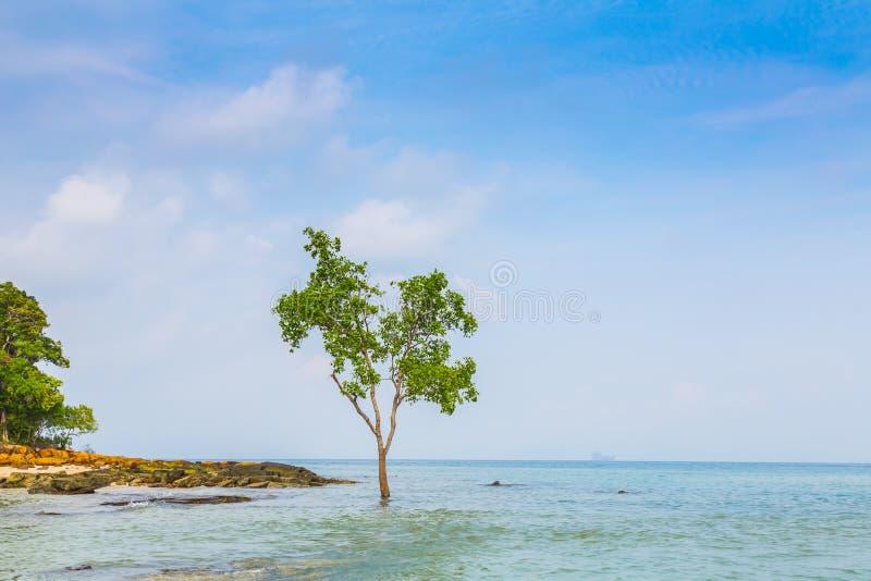Download Osamotniony Drzewo Na Dennym Tle Obraz Stock - Obraz złożonej z ocean, seascape: 57651991
