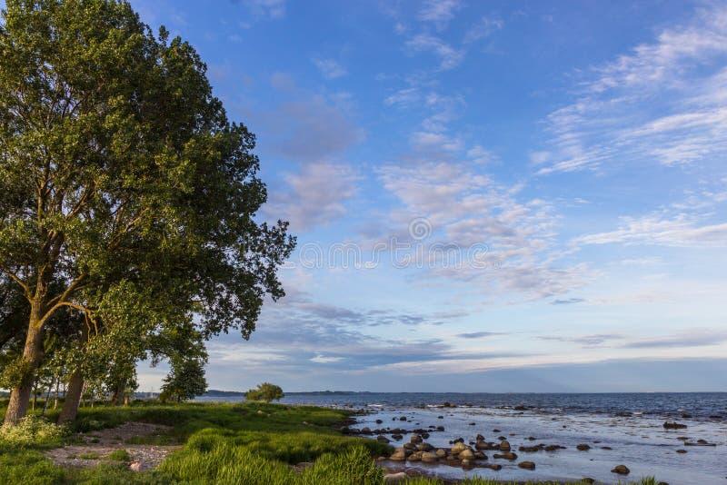 osamotniony drzewo na morza bałtyckiego wybrzeżu, Scania okręg administracyjny, Szwecja obraz stock