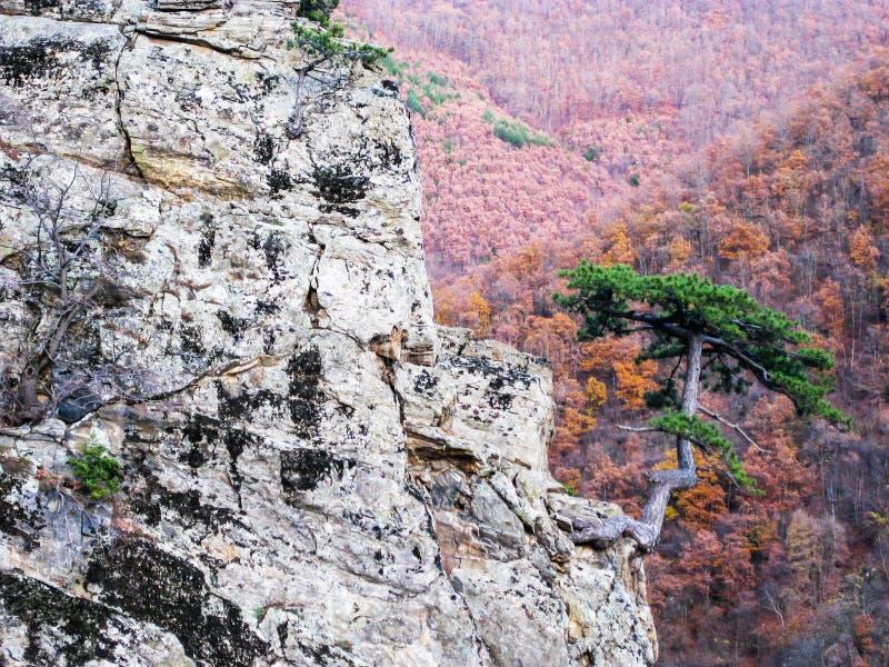 Osamotniony drzewo na skale fotografia stock