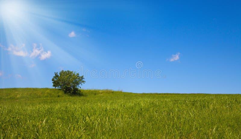 Osamotniony drzewo przeciw jasnemu niebieskiemu niebu obrazy stock