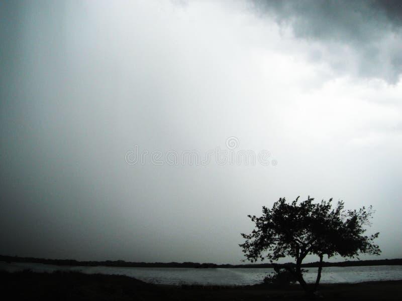 Osamotniony drzewo w burzy zdjęcia stock