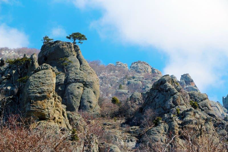Osamotniony drzewo w górach zdjęcie stock