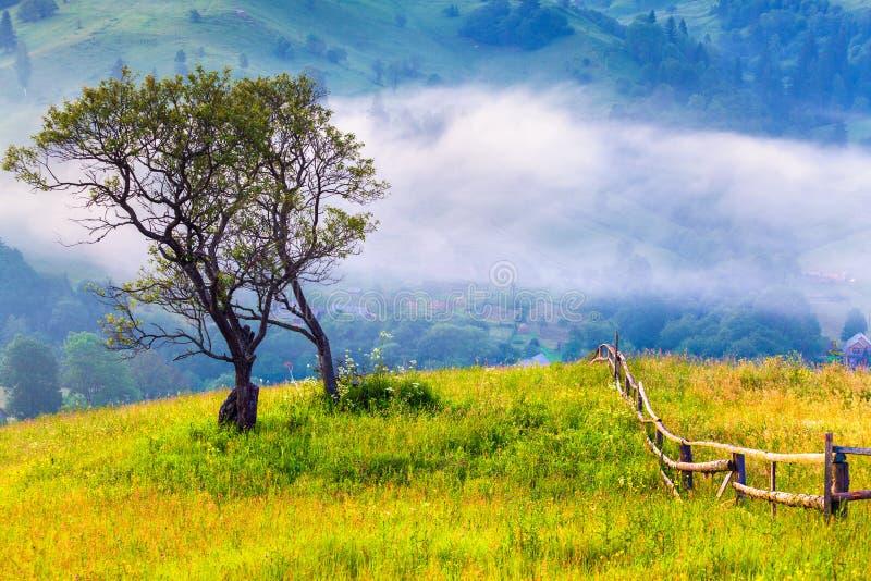 Osamotniony drzewo w mglistym ranku fotografia stock