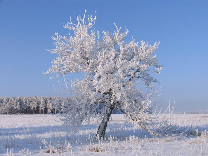 Osamotniony drzewo w mrozie obrazy stock