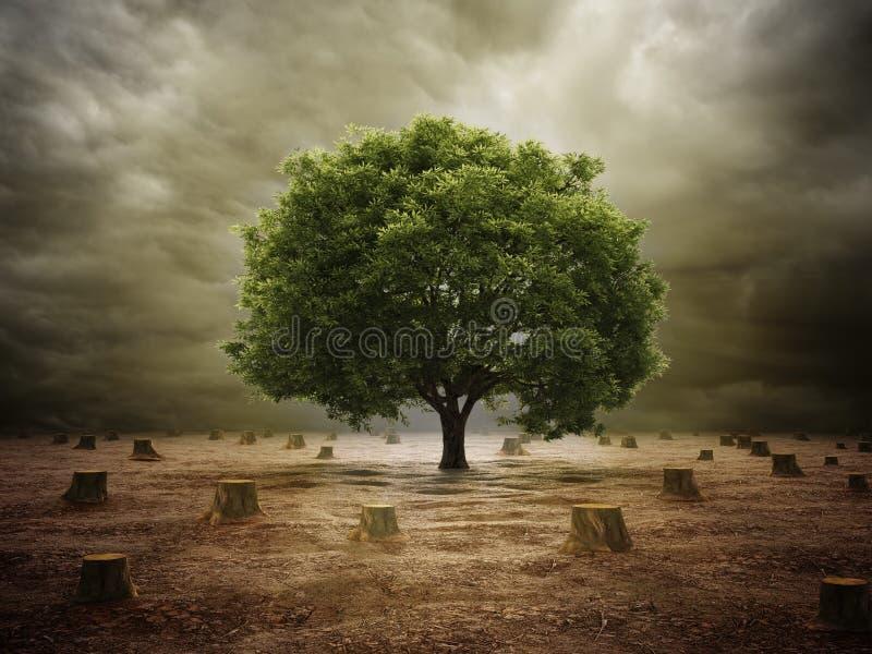 Osamotniony drzewo w poleśnym krajobrazie royalty ilustracja