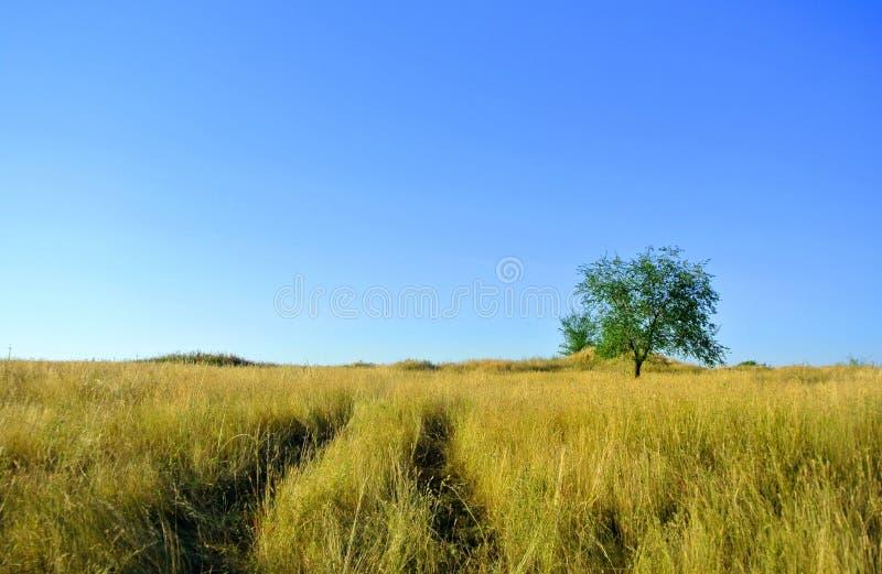 Osamotniony drzewo w polu obrazy royalty free