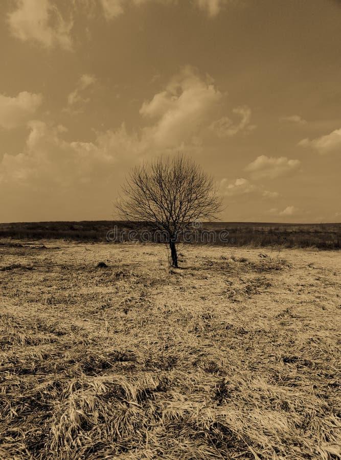 Osamotniony drzewo w polu piękna krajobrazowa fotografia retro fotografia stock