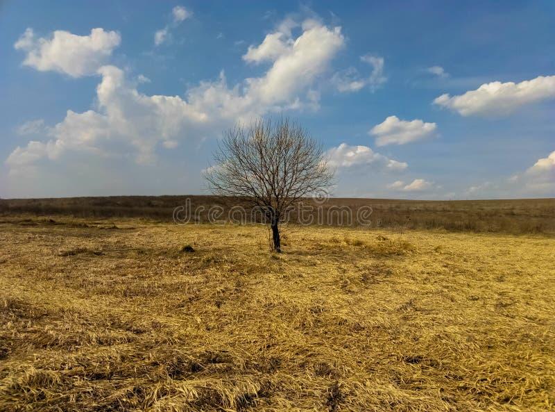 Osamotniony drzewo w polu piękny krajobraz zdjęcia stock