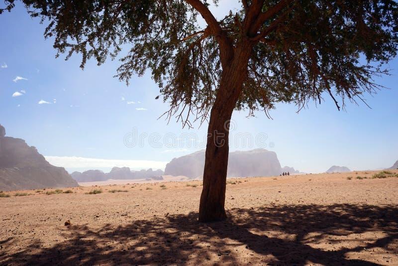 Osamotniony drzewo w wadiego rumu zdjęcie royalty free