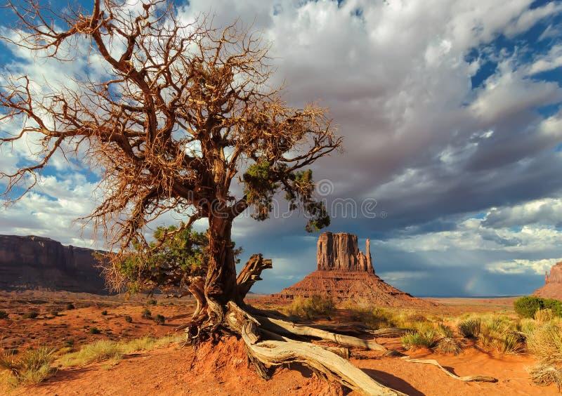Osamotniony drzewo walczy dla życia w pustyni zdjęcia stock