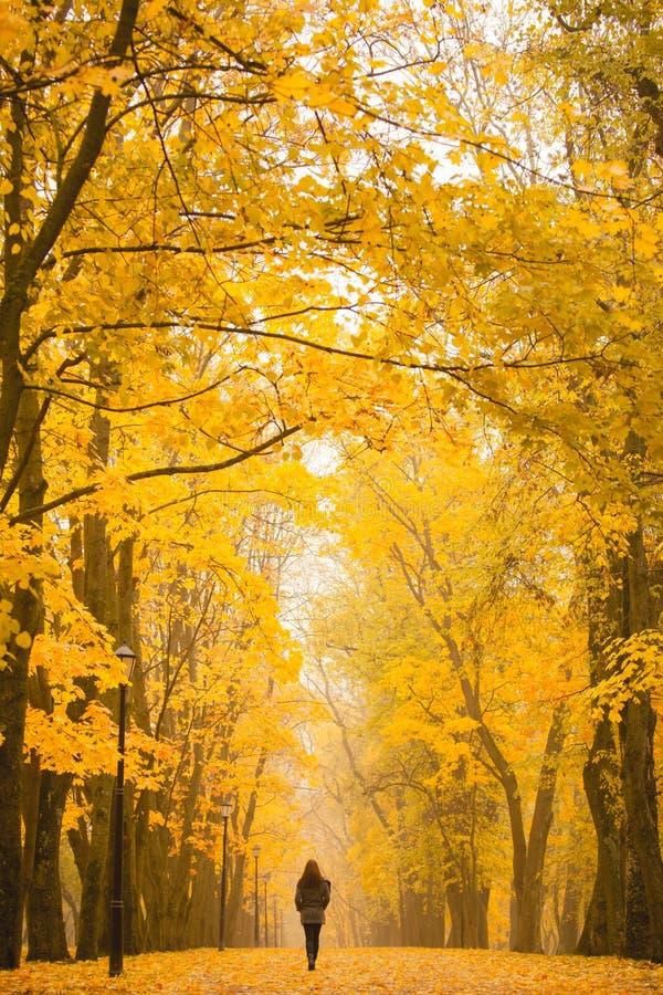 Osamotniony kobiety odprowadzenie w parku na mgłowym jesień dniu Osamotniona kobieta cieszy się natura krajobraz w jesieni zdjęcie stock