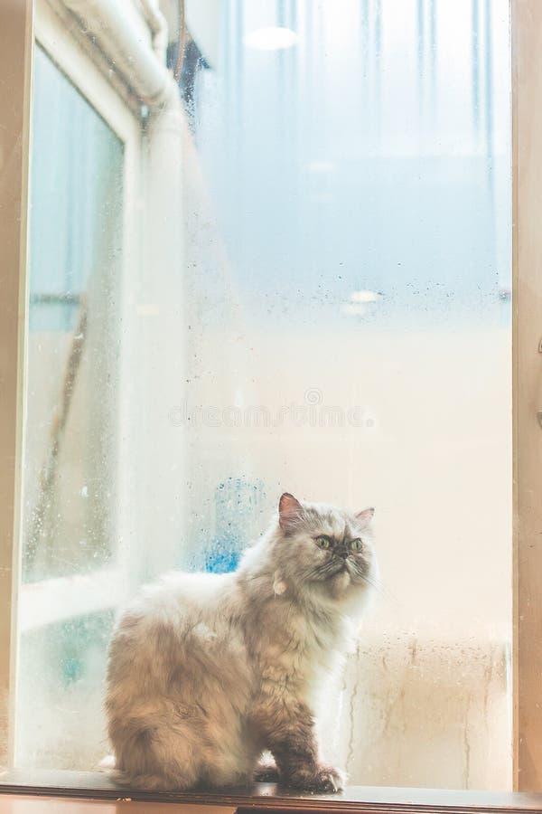 Osamotniony kot obok okno przy deszczowym dniem zdjęcie stock