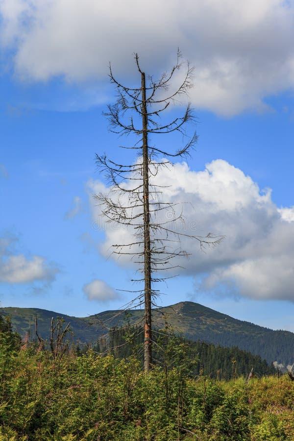 Download Osamotniony nieżywy drzewo zdjęcie stock. Obraz złożonej z śmierć - 28952870