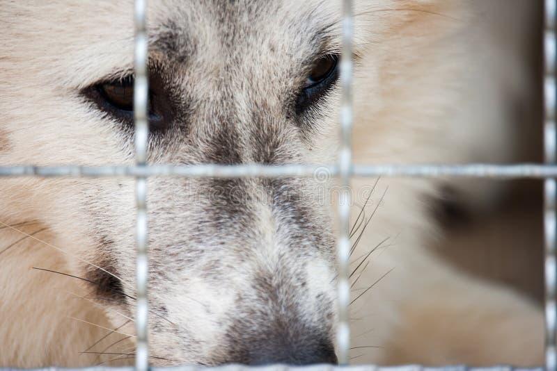 Osamotniony pies łapać w pułapkę w klatce i czekaniu dla ocalałego od huma obraz stock