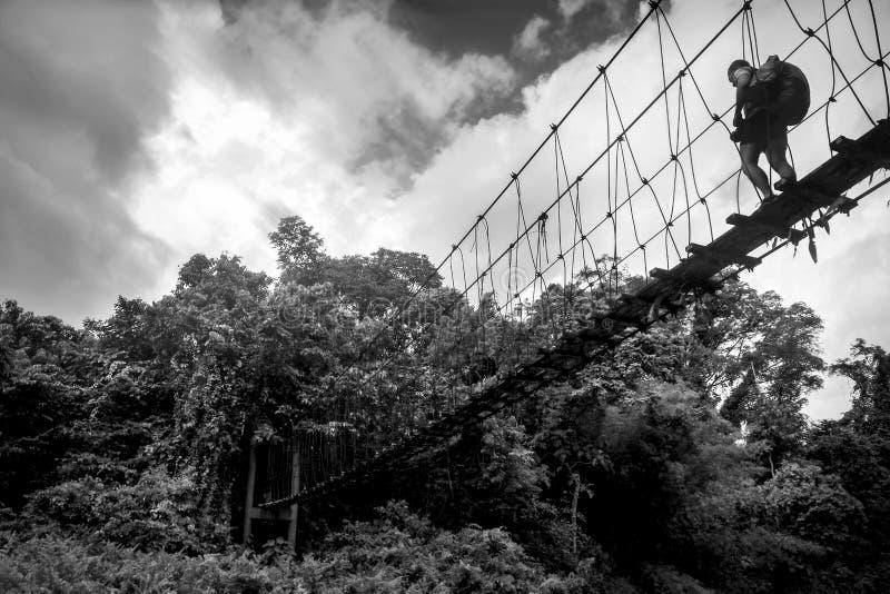 Osamotniony podróżnik chodzi wzdłuż zawieszonego drewnianego mosta nad lasem tropikalnym Borneo Kalimantan Czarny i biały wizerun zdjęcia royalty free