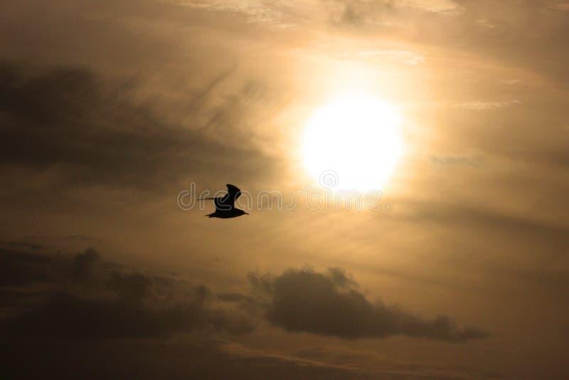 Osamotniony ptak obraz royalty free