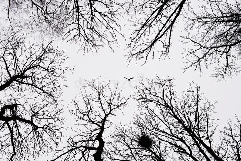 Osamotniony ptasi latanie wśród zim drzew obrazy stock