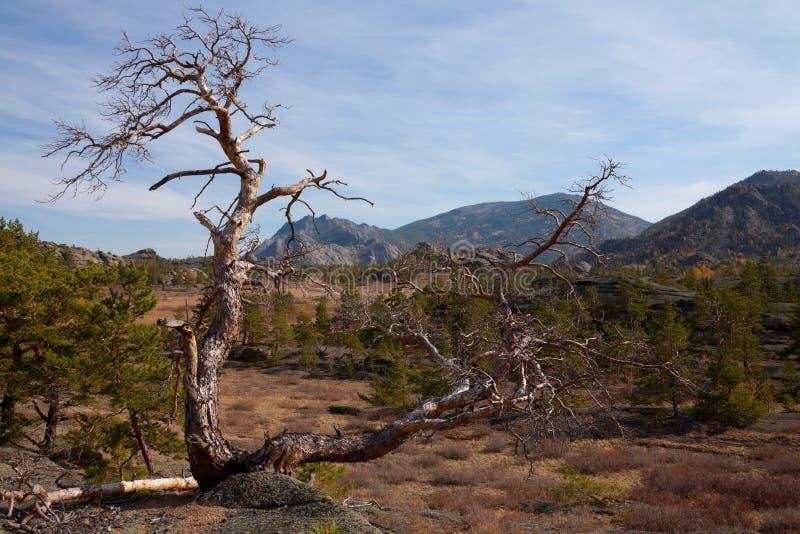 Osamotniony suchy drzewo w górach zdjęcie stock