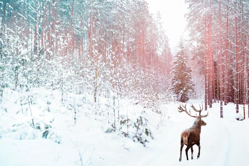 Osamotniony szlachetny rogacz przeciw zima czarodziejskiego lasu zimy Bożenarodzeniowemu wakacyjnemu wizerunkowi Wizerunek tonują obraz stock