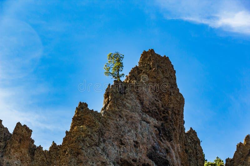 Osamotniony wałkowy drzewo na wysokiej skale Góry wokoło wulkanu Teide, częsciowo zakrywający chmurami jasne niebo niebieskie Tei zdjęcia stock