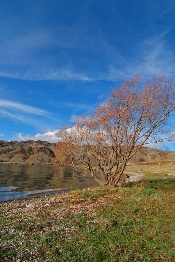Osamotniony więdnący drzewo fotografia stock