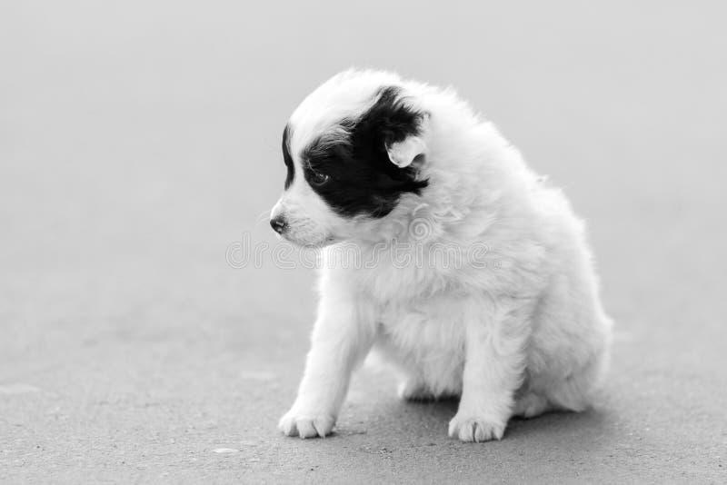 Osamotniony złowrogi szczeniaka obsiadanie na bruku zdjęcie royalty free
