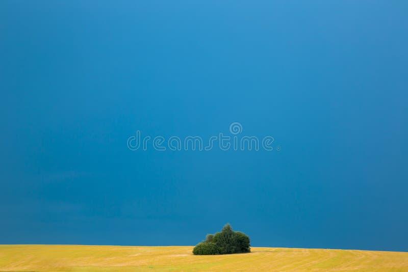 Osamotniony zielony krzak przeciw tłu niekończący się niebieskie niebo pszeniczny pole i Tło kosmos kopii obraz stock