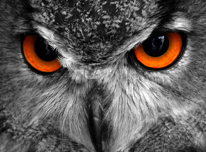 Oscar The Eagle Owl. Full face shot of a Eagle Owl I converted the shot to black and white and painted the eye colour back in