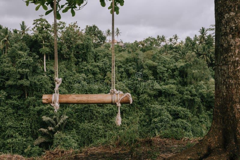 Oscilación de bambú en la cuerda en el bosque tropical imagen de archivo