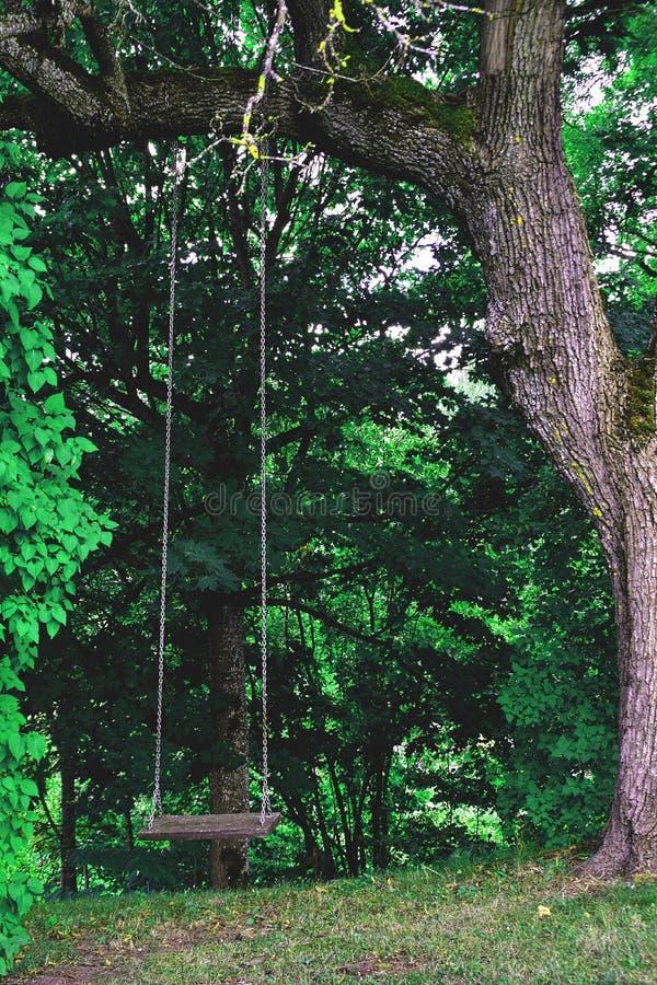 Oscilación de madera en el bosque verde fotografía de archivo
