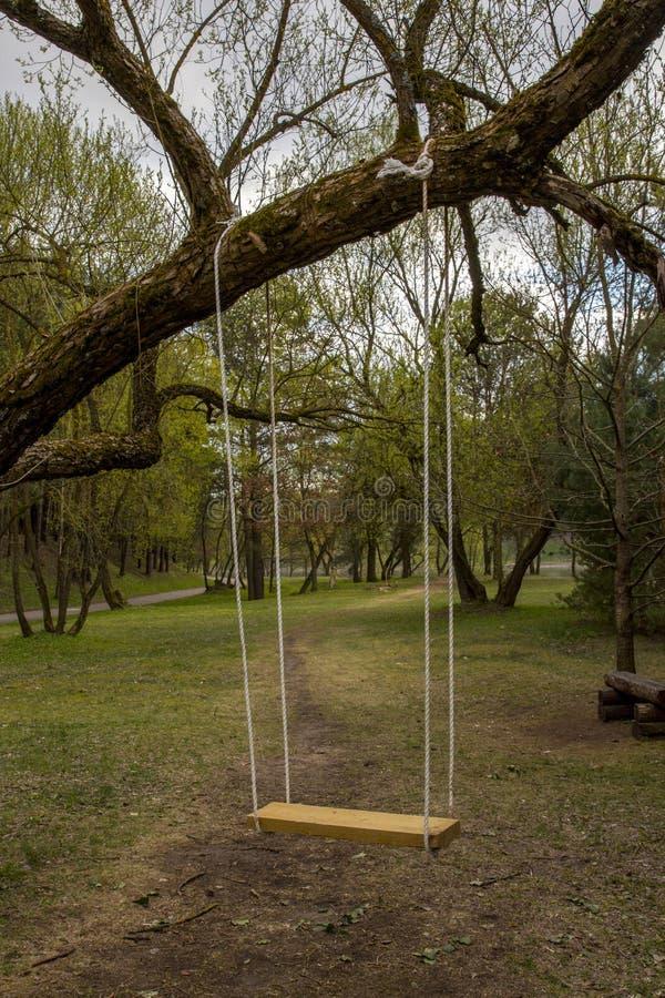 Oscilaciones del árbol Oscilaciones del jardín del oscilación del árbol imagen de archivo libre de regalías