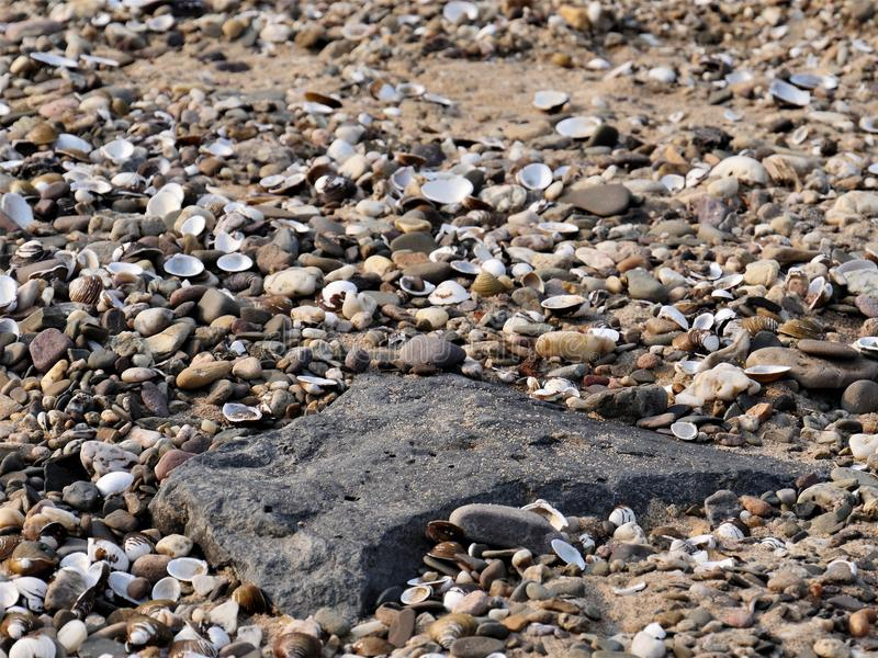 Oscile en un ambiente de cáscaras de los mejillones del río, de los pequeños guijarros y de la arena en la playa de un río foto de archivo libre de regalías