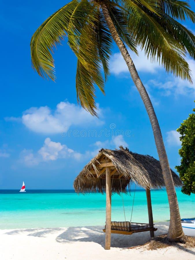 oscillation de plage tropicale photo libre de droits