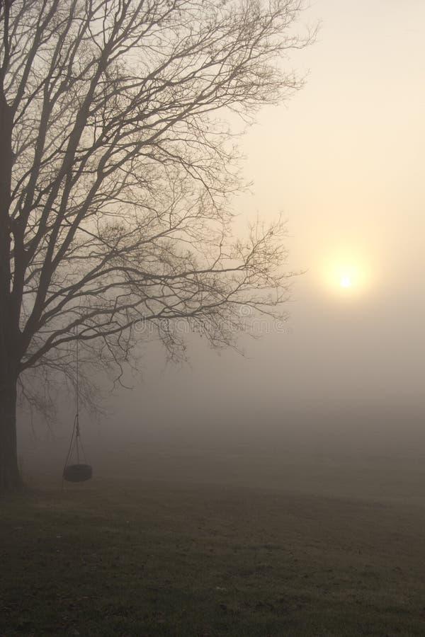 Oscillation de pneu en brouillard de matin image libre de droits