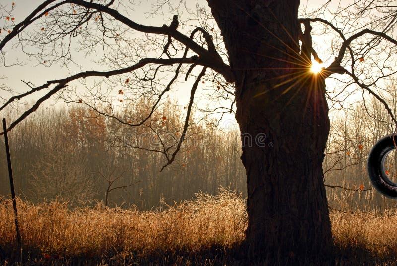 Oscillazione di autunno immagini stock