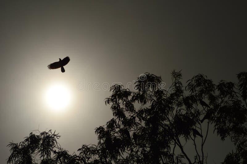 Oscuramento del volo fotografia stock