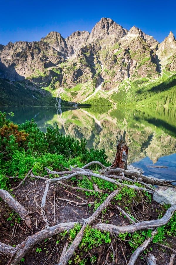 Oscuridad hermosa en la charca en las montañas de Tatra en verano foto de archivo libre de regalías