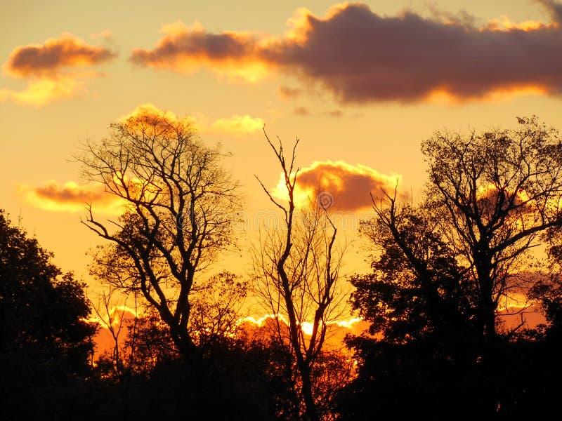Oscuridad y árboles silueteados presentimiento imágenes de archivo libres de regalías