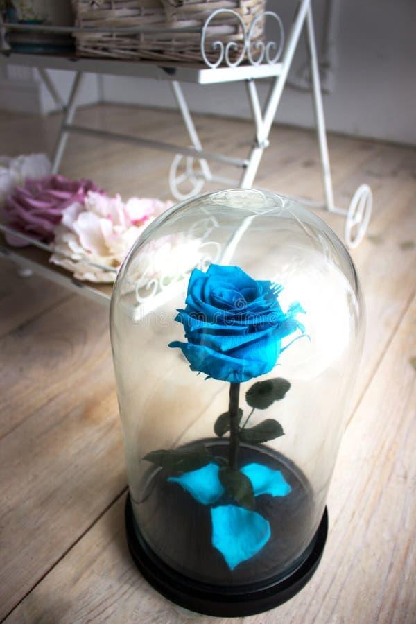 Ose bleu dans un flacon de verre photos stock