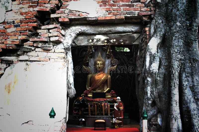Osedda Thailand, fördärvar av den gamla templet med ett Bodhi träd rotar arkivfoton