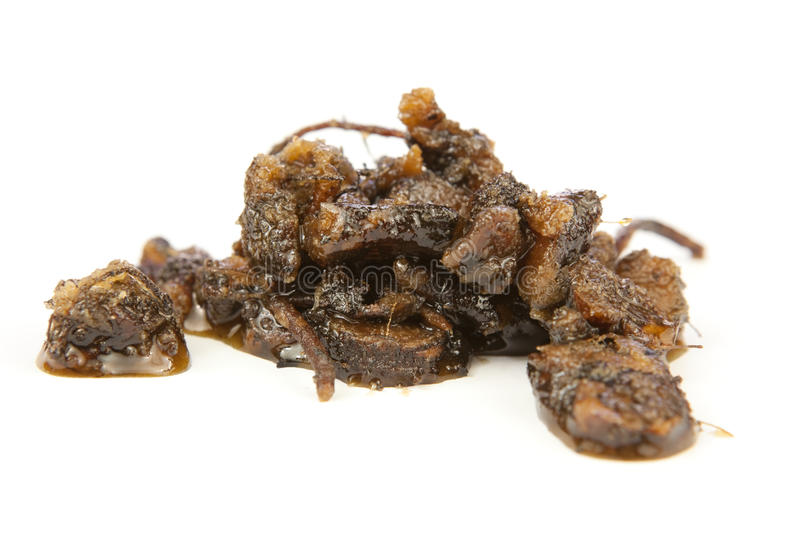Download Osha root candied in honey stock image. Image of root - 18615489