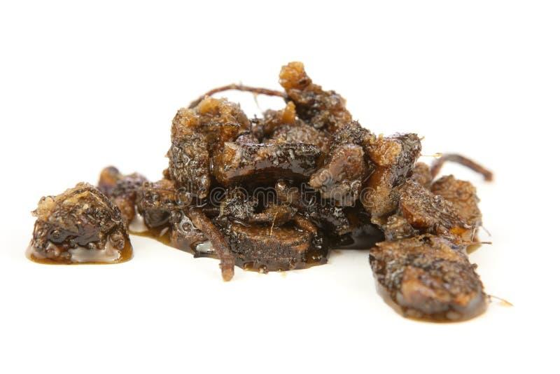 Osha wortel geglaceerd in honing royalty-vrije stock afbeeldingen