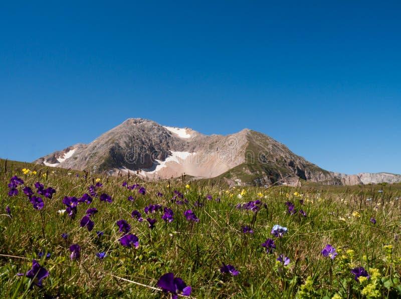 Oshten berg bland de alpina blommorna fotografering för bildbyråer