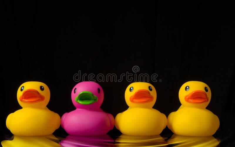 Osi essere differente - anatre di gomma sul nero - con l'ondulazione dell'acqua fotografia stock libera da diritti