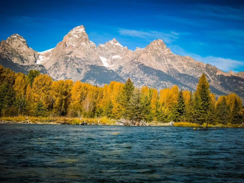 Osiki, Evergreens i Teton góry w spadku zdjęcie stock
