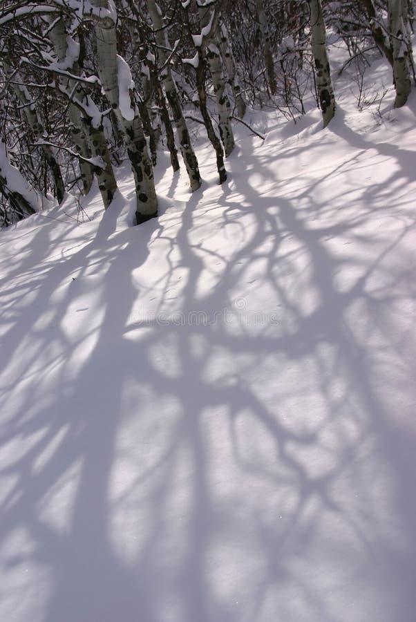 osiki ogołacają koślawą cienia śniegu zimę zdjęcie royalty free