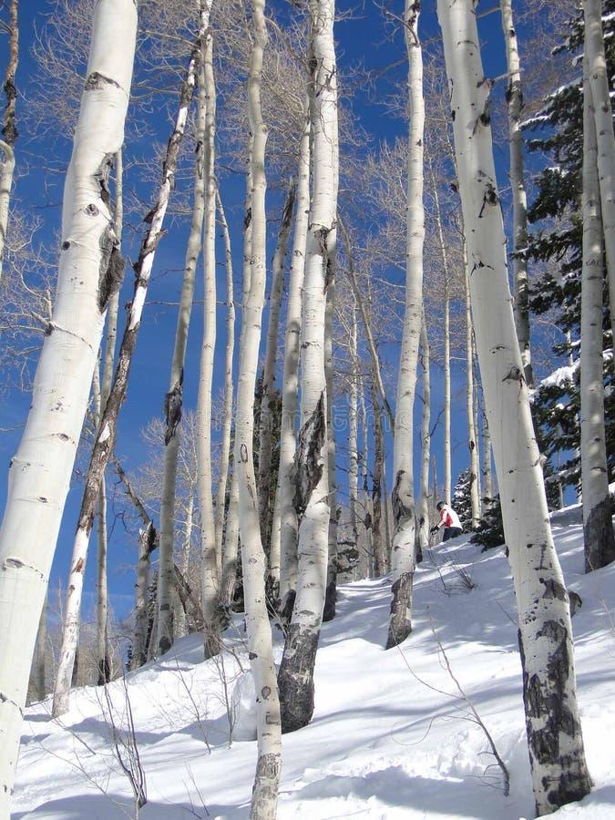 osiki ogołacają narciarki samotną zima obraz stock